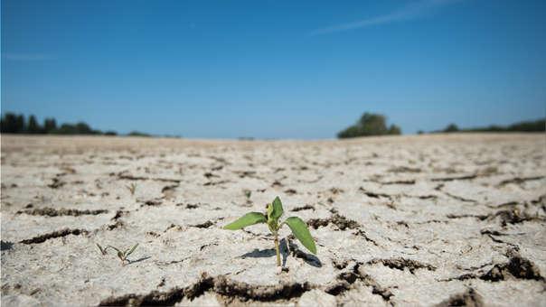 La organización da nueve recomendaciones que incluyen el reconocer que el cambio climático impacta en la salud de la población.