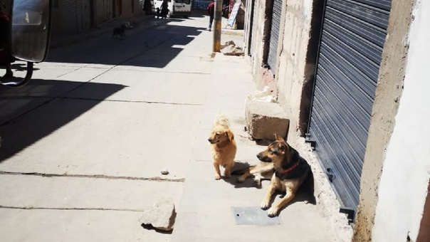 Alerta roja por rabia canina en Chumbivilcas.