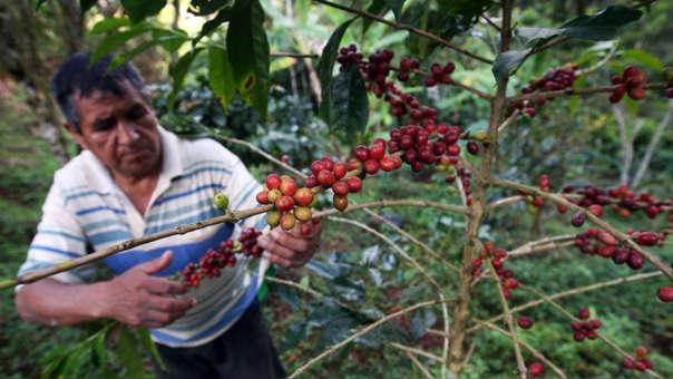 La producción de café involucra a 220 mil familias peruanas.