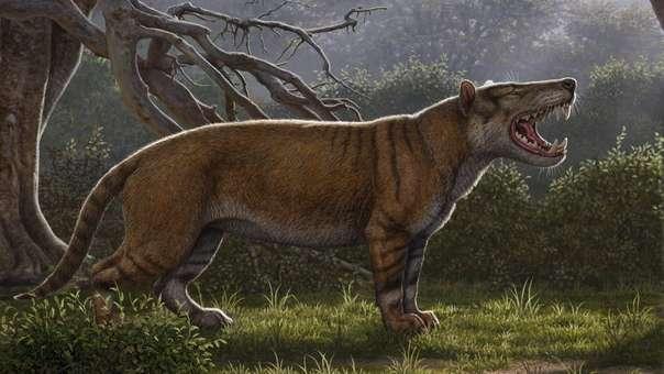 Nuevo carnívoro gigante