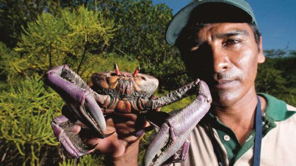 Conservación de cangrejos en Manglares de Tumbes