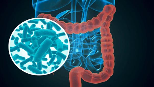 Microbiota intestinal: ¿Por qué es tan importante para el organismo?