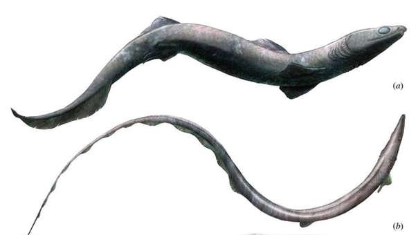 Tiburón ancestral