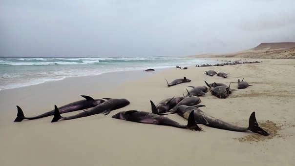 Playa Cabo Verde