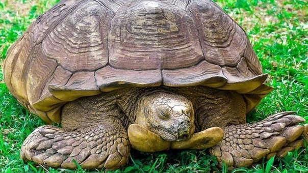 La tortuga, de acuerdo con sus dueños, falleció a los 344 años.