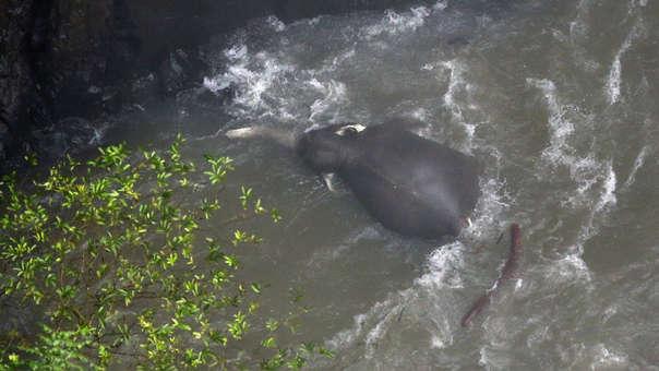 Uno de los elefantes fallecidos en Tailandia