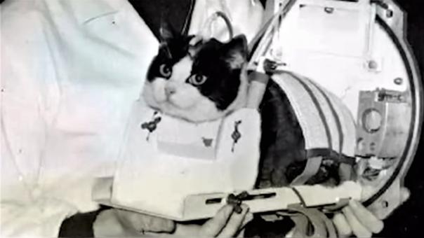 """El 18 de octubre de 1963 el programa espacial francés lanzó en una nave a """"Félicette"""", el único gato que ha podido ir al espacio"""