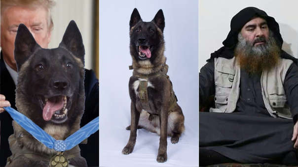 Izquierda: foto editada compartida por Donald Trump en el que aparece 'condecorando' al perro. Centro: Foto de 'Conan' difundida por el propio Donald Trump. Derecha: Abu Bakr Al Bagdadi, el cabecilla del Estado Islámico.