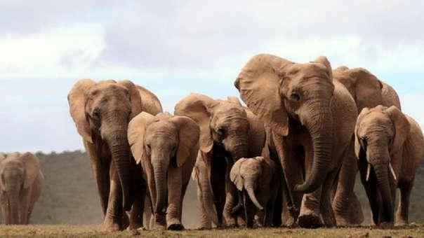 Elefantes de Zimbabue