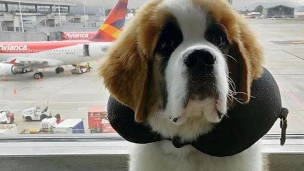 Viajar con tu mascota es fácil.