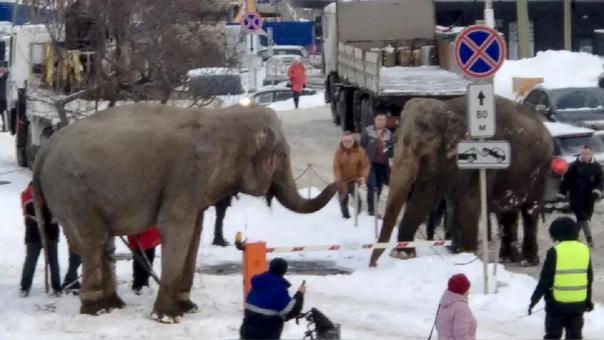 Elefantes en Ekaterimburgo