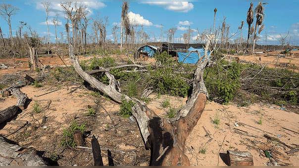 Once regiones han disminuido la tala indiscriminada de árboles.