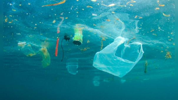 Los peces comen microplásticos pues no llegan a diferenciarlos.