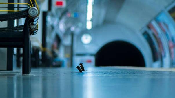 La fotografía de Sam Rowley capturó la pelea de dos ratones en una estación del metro de Londres.