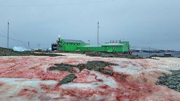 Sangre - Antártida