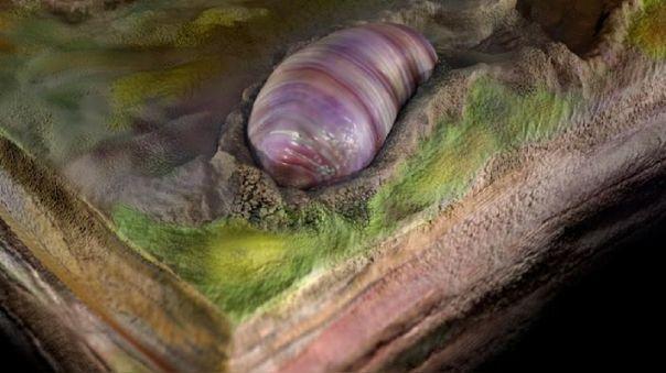 Recreación de la criatura como un gusano, clasificada como el pr