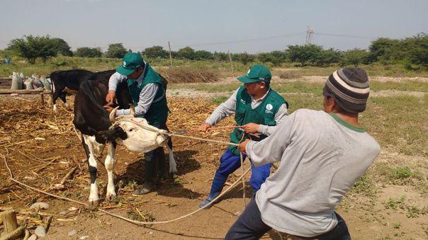 Agricultores del Medio Piura