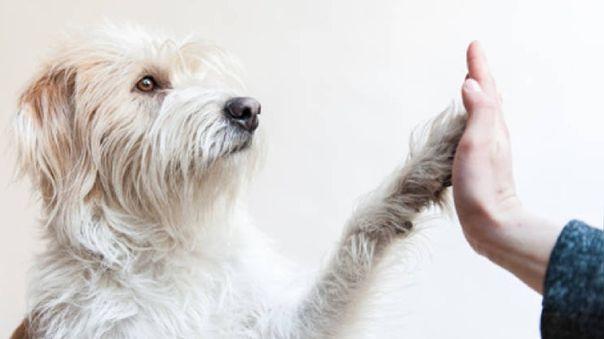 Muchas personas han abandonado a sus mascotas en las calles, por falta de recursos o por temor a un posible contagio, pese a que no hay evidencia que perros y gatos transmiten la COVID-19 a sus dueños.
