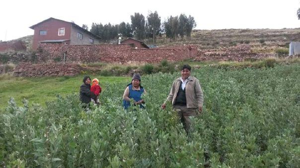 La papa nativa no pudo ser cosechada en Platería, distrito de Puno.