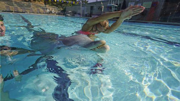 Robot delfín para parques acuáticos
