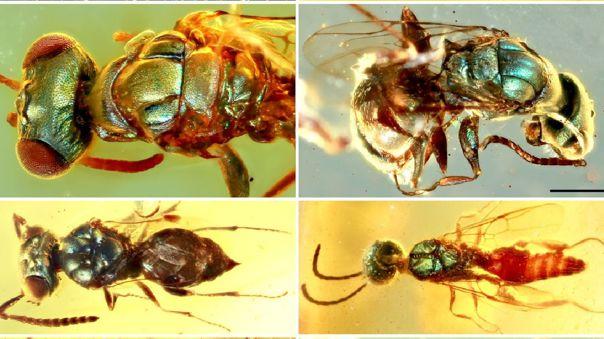 Insectos en ámbar del Cretácico