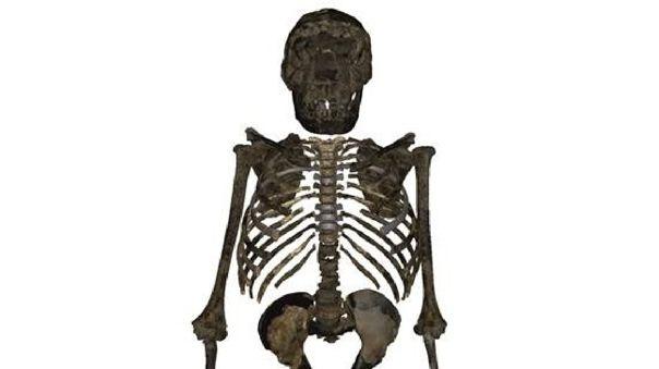 Reconstrucción del esqueleto del 'H.Erectus juvenil' de 1,5 mill