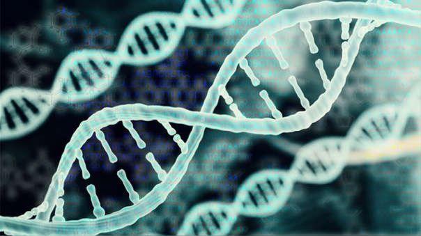 La técnica aprovecha la capacidad de almacenamiento de información de las hebras entrelazadas de ADN sintético para codificar y recuperar información de una manera duradera y compacta.