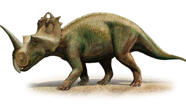 Centrosaurus Apertus