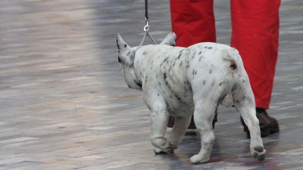 El Gobierno informó que sí se podrá sacar a pasear a las mascotas este domingo de inmovilización total.