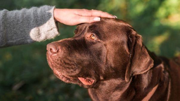 Los que tenemos una mascota en casa, sabemos que si tuviéramos la oportunidad de pedir un deseo sería que nuestro amigo peludo viva para siempre junto a nosotros. Sin embargo, como todo ser vivo, llega el momento en donde nuestra mascota entra a una edad avanzada.