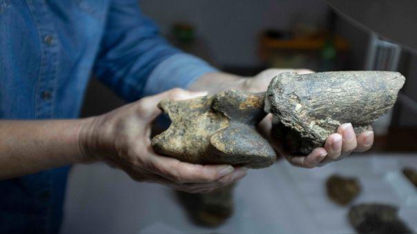 Fósil de perezoso gigante