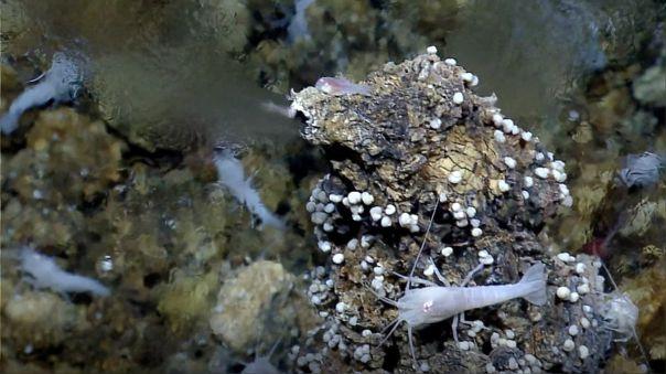 Respiradero hidrotermal de fondo marino como el simulado en el J