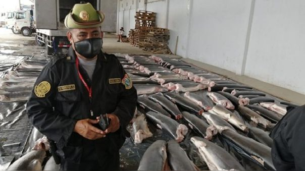 Incautan carne de tiburón