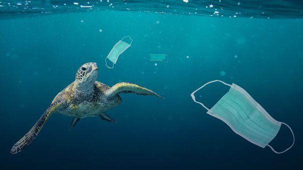 ¡Salvemos nuestros océanos! Los desechos de la COVID-19 afectan a cientos de especies marinas