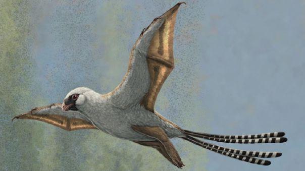 Ambopteryx planea