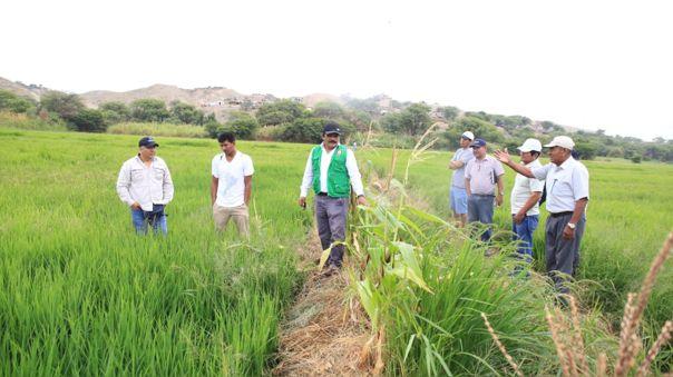 Agricultores en Piura