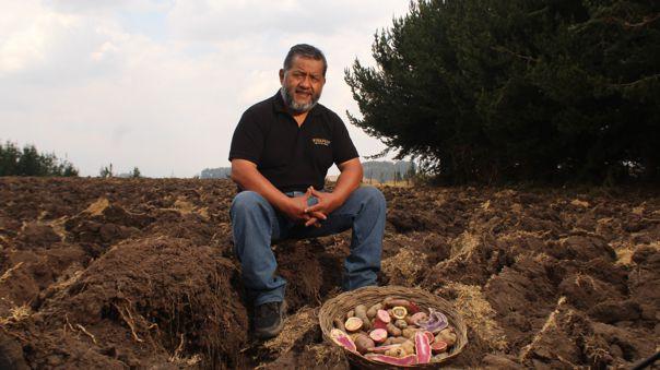 La papa nativa peruana es un alimento que aporta una variedad de vitaminas y minerales que la han convertido en única y sumamente valorada por las gastronomías mundiales.