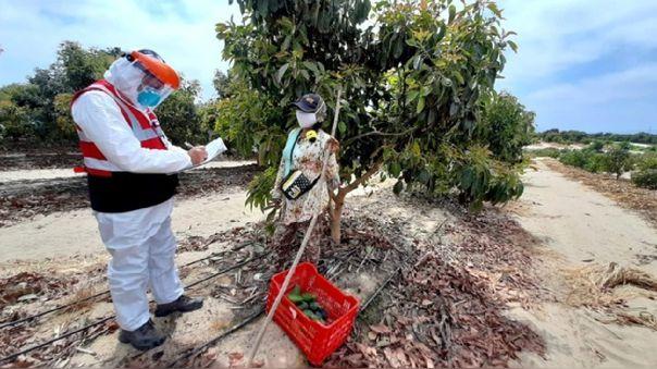 Crearán sindicato para proteger a trabajadores de empresas agroindustriales.