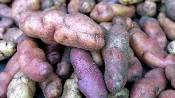 Crisis agraria en Huánuco