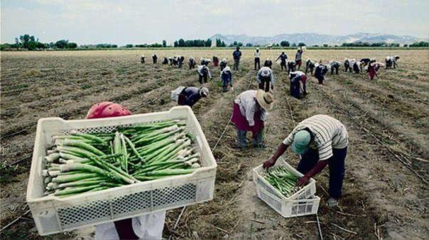 Trabajadores agrarios