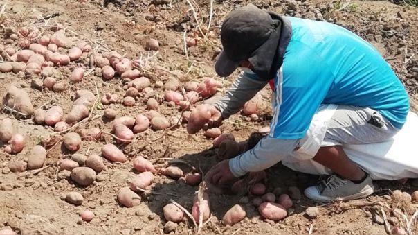 Trabajadores de las agroexportadoras no están conformes con nuevo régimen aprobado en el Congreso.