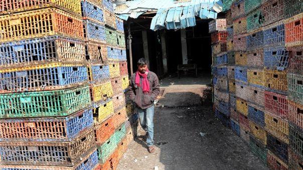 India confirma brotes de gripe aviar
