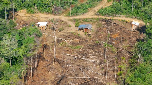 Urge fortalecer medidas para luchar contra el avance de los delitos ambientales