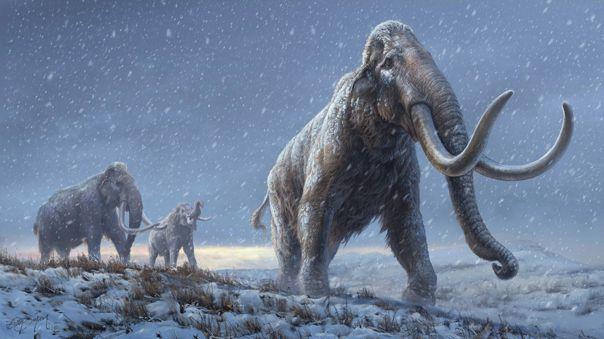 Especímenes de mamut