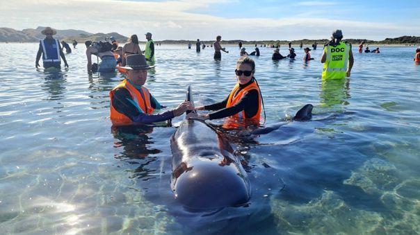 nueva-zelanda-rescata-a-decenas-de-ballenas-varadas-por-segunda-vez