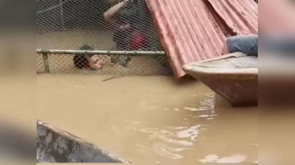 La casa de Fernando Rosemberg, propietario del centro de rescate afectado, se ha convertido en el albergue temporal de los animales.