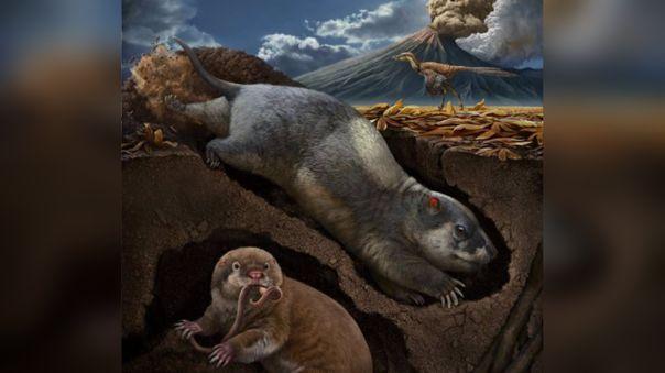 Fossiomanus sinensis y Jueconodon cheni