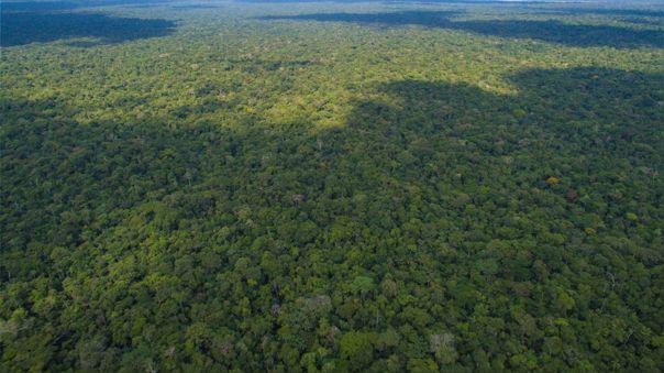 La Amazonía brasileña perdió 367,6 kilómetros de selva en marzo