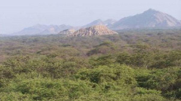Loreto, San Martín y Ucayali han perdido 251,737 hectáreas de bosques