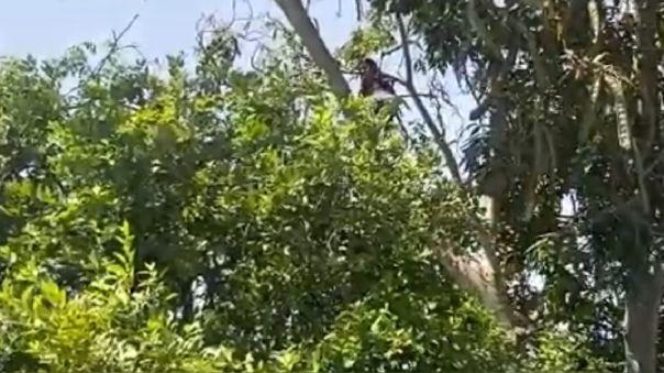 Niña en árbol